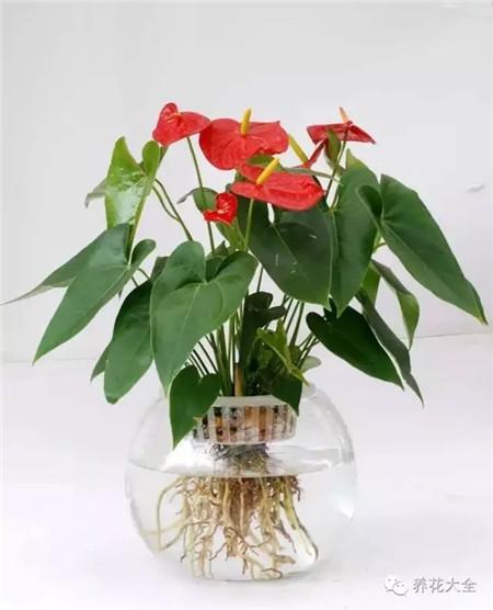 4步养花法,新手也能养好花