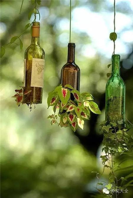 酒瓶花盆美图