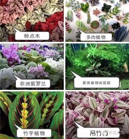选择什么植物