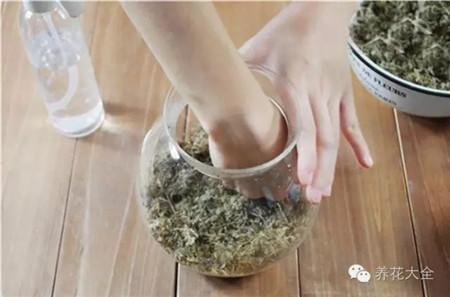 添加一层水苔
