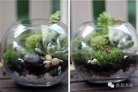 玻璃瓶子中的美景