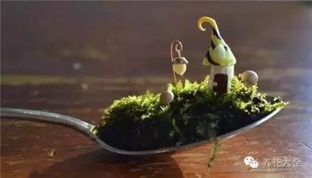 茶匙也是可以变身花园的