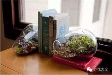 将微型花园当做是书夹也是不错的选择哦