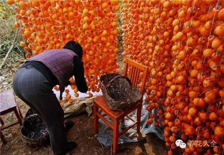 秋天,丰收的日子里哪里都是甜蜜