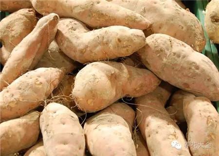 步骤一 菜市场上挑红薯