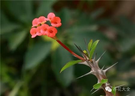 带刺的植物