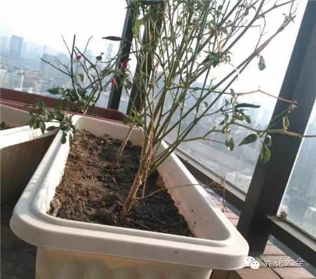 哪些植物会带来不利的风水