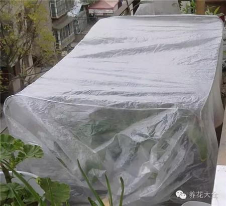 用塑料袋做温室