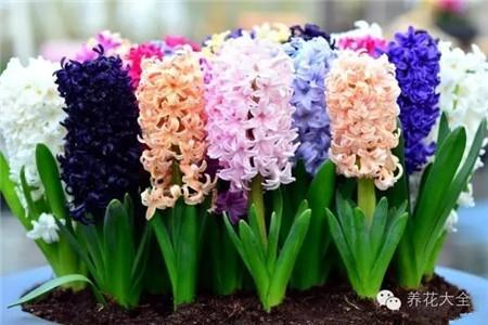 中温温室花卉