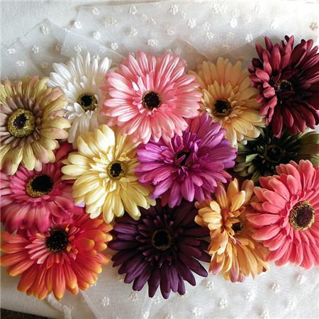 非洲菊开花图片