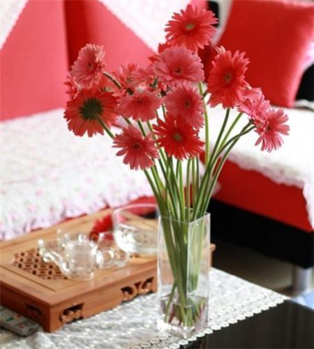非洲菊瓶插图片