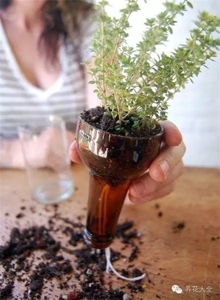 放上土,种上花