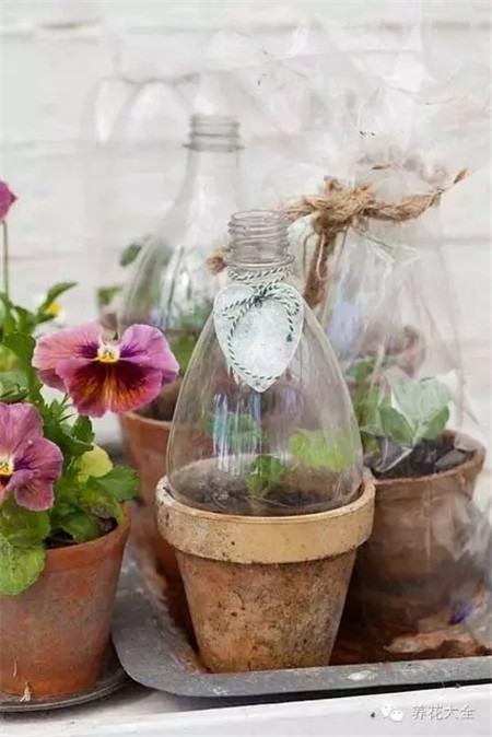 自制玻璃花房