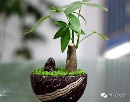 客厅摆放植物,全家喜气