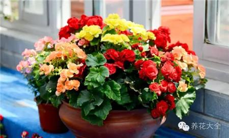 观花植物:叶刷&叶擦