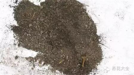 腐叶土和河沙