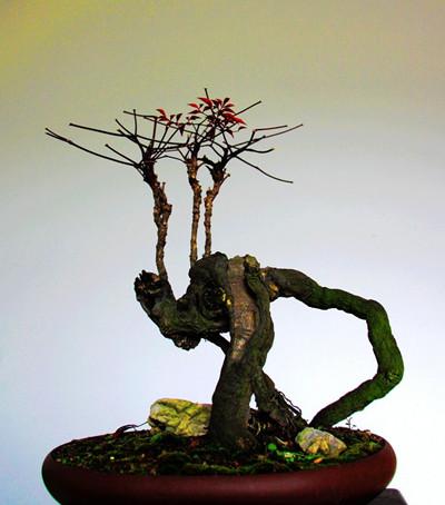 南天竹盆景修剪方法二:针刺