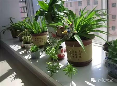 冬季暖气房养花
