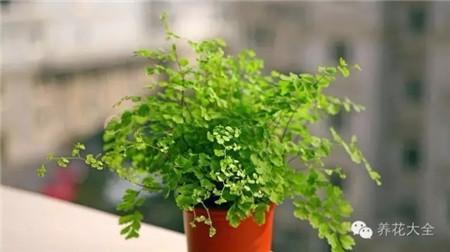哪些植物适合放在卫生间