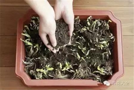 土壤均匀撒在盆中