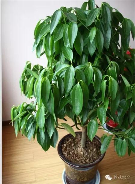 植办公室_厕所总有异味?别担心!10种植物让空立马清新-花百科