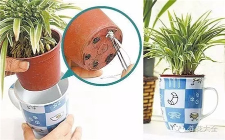 用棉线制作自动浇水器