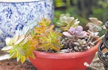 选择耐旱植物