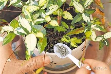 使用缓释肥料
