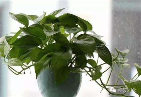 冬季植物多久浇一次水?