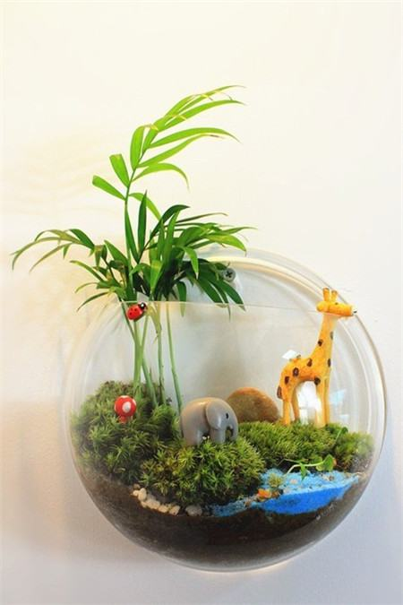 苔藓的养殖方法