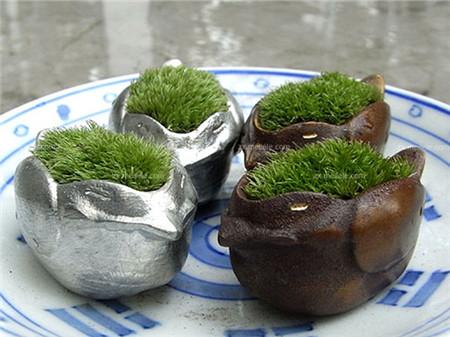 苔藓的繁殖方法