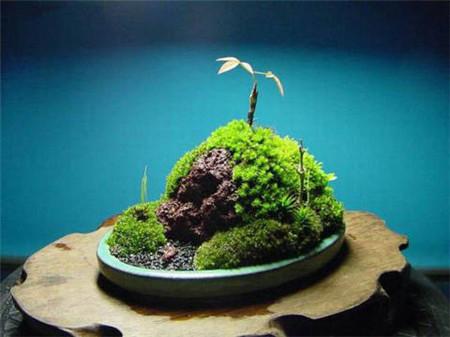 朽木苔藓盆景的制作过程