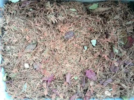 土上面再盖一层落叶