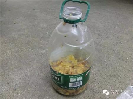 果皮+红糖装入桶中加上水