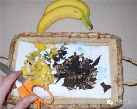 香蕉皮剪碎