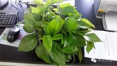 给植物根部浇少量水,不要一次性浇透,不利于植物吸收水分。