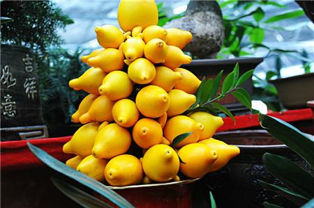 黄金果的病害及其防治