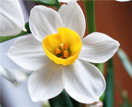 水仙花的象征