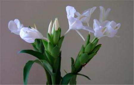 花的养殖注意事项