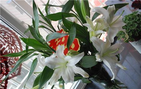 百合花要如何摘除花蕊