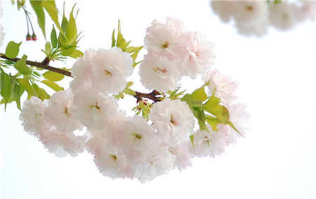 樱花和生活相关联