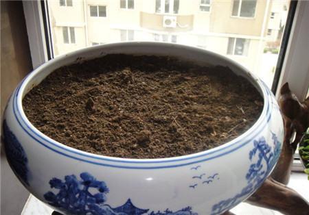 营养土放进盆里
