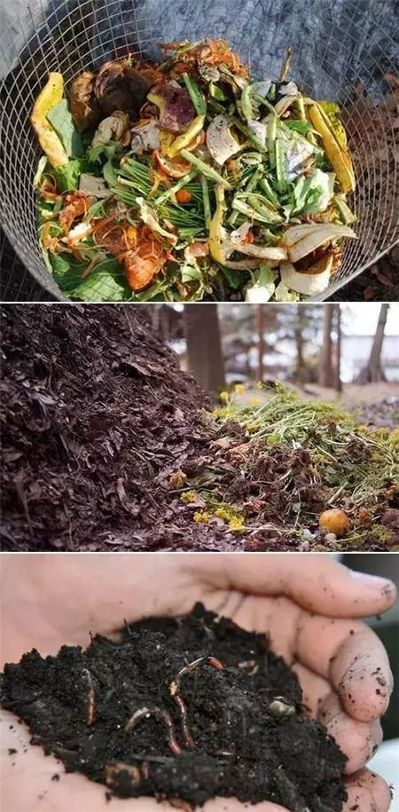 各种菜叶果皮沤肥