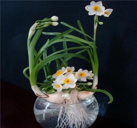 水养水仙花烂根预防——装饰品的选择