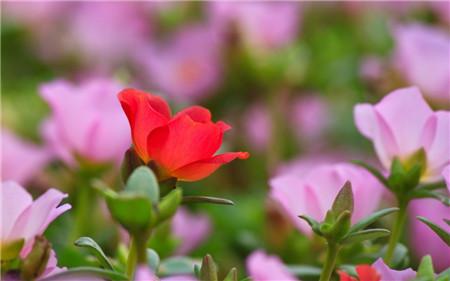 半枝莲什么时候开花