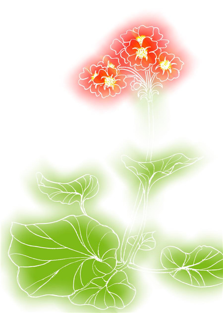 四季樱草的播种法繁殖