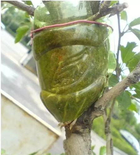 塑料瓶包在枝条