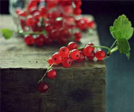 鹅莓水肥管理