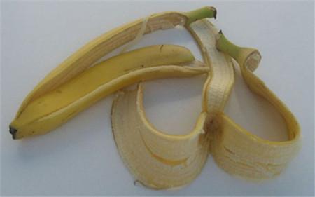 香蕉可以养花