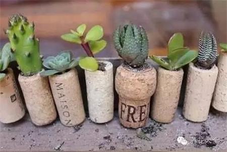 小物件都能做花盆,你都知道吗